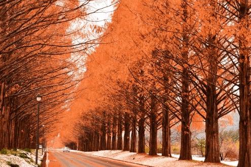 【2020年11月連休】大阪から日帰りで紅葉を楽しむ!秋のドライブおすすめ10選【穴場も!】