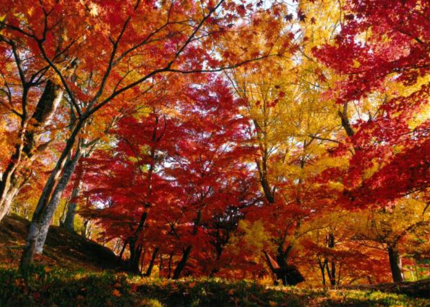 【関西】2020年11月の連休が見ごろ!紅葉の穴場スポット12選【混雑回避】