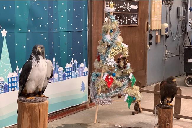 【富士宮市】限定クリスマスイベント! フクロウの飼育員体験
