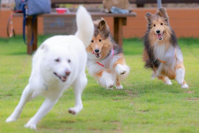 【関東】愛犬と車中泊ができる場所10選!ドッグラン有も!