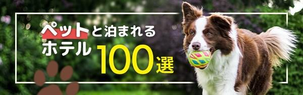 【関西】愛犬と車中泊ができる場所10選!ドッグラン有も!